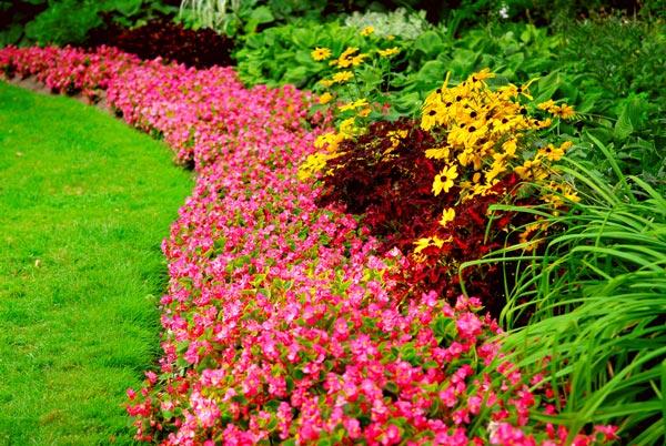 Garden Care & Design